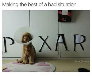 dog and pixar image