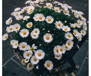 boho, daisy, and gipsy image