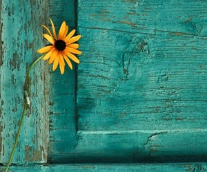 flower, yellow, and blue image