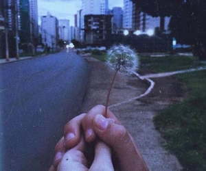 grunge, dandelion, and flowers image