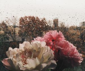 flowers, rain, and rainy day image
