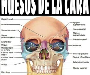 medicine, salud, and doutor image