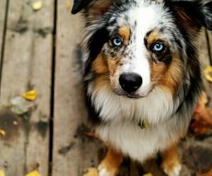 dog, cute, and blue eyes image