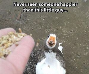 happy, duck, and funny image