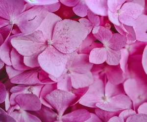 flowers, pink, and texture image