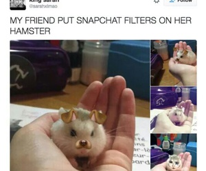 filter, hamster, and cute image