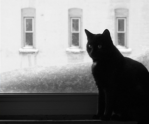 black and white, black cat, and cats image