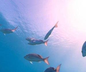 sea, fish, and blue image