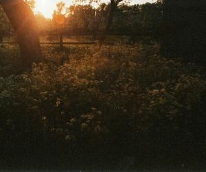 bohemian, boho, and field image