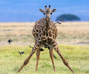 africa, Kenya, and travel image