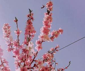 amazing, flowers, and nature image