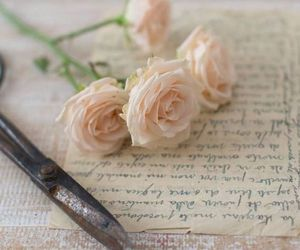 rose, flowers, and Letter image