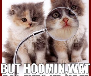 cat, little red riding hood, and magnifying glass image