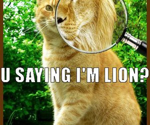 cat, liar, and magnifying glass image