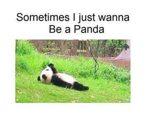 panda, black, and funny image