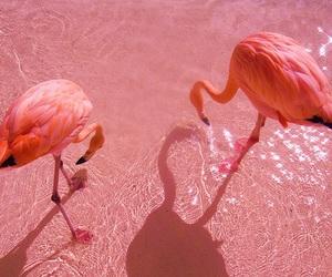 animal, tumblr, and glow image