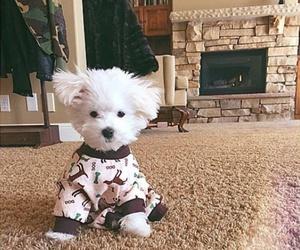 dog, cute, and buddy image