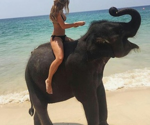 elephant, summer, and beach image
