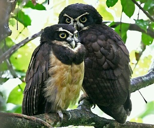 animals, couple, and nature image