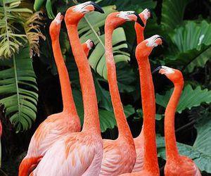 flamingo, pink, and tropical image