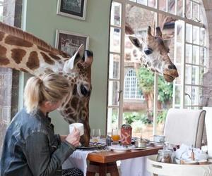 giraffe, breakfast, and holiday image
