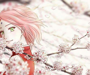 sakura, anime, and beautiful image