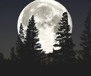forest, luna, and nature image