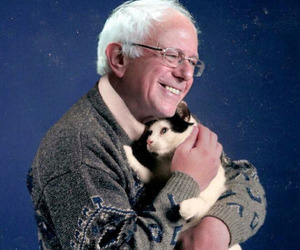 cat and bernie sanders image