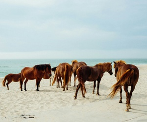 horse, beach, and sea image