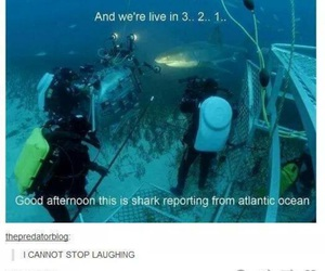 fun, funny, and shark image