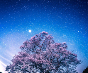 night, pink, and tree image