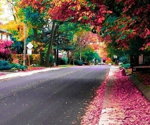 street, autumn, and pink image