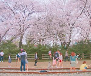 cherry blossom, korea, and 벚꽃 image