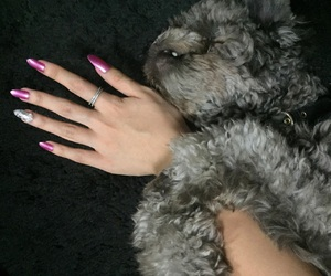 bling, puppy, and claws image