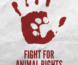 animal, animal rights, and fight image