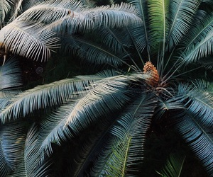 green, nature, and palm trees image