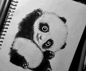 panda, cute, and drawing image