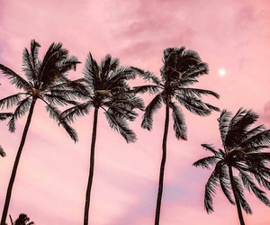 pink, sky, and palm trees image