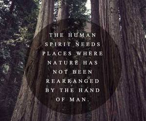 nature, quotes, and spirit image