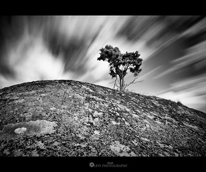 bw, canon, and King of the Hill image