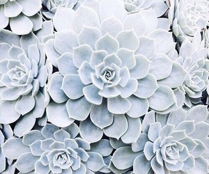 blue, flowers, and theme image