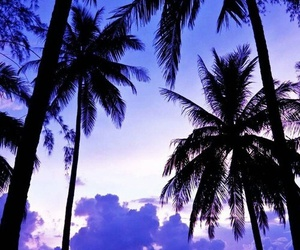 palms, sea, and purple image