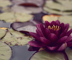 flowers, lotus, and nature image