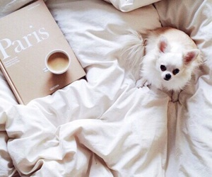 dog, coffee, and bed image