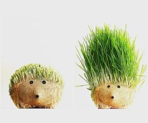 green, hedgehog, and minimalist image
