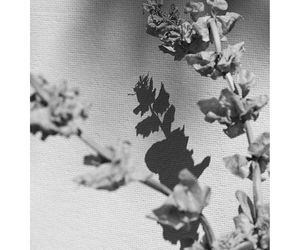 black and white, photography, and plants image