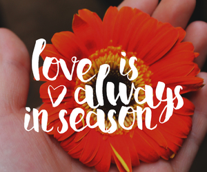 flower, quote, and love image