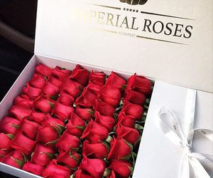 roses and imperial roses image