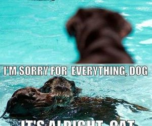 cat, dog, and drowning image