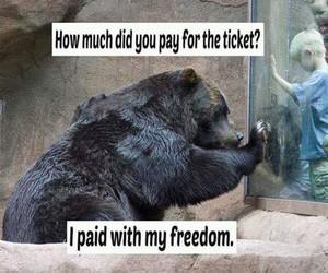 animal liberation image